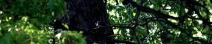 cropped-bird-300x63