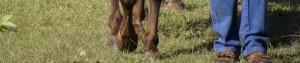 cropped-pastureFeet-300x63