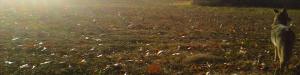 fieldVisitor-300x75