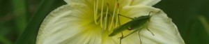 cropped-grasshopper-300x63