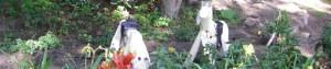 cropped-ponyFlowers-300x63