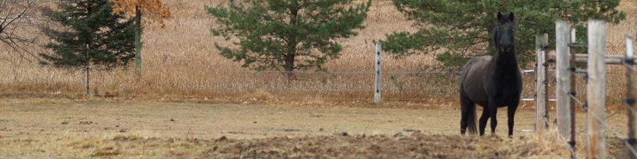 pastureprince2